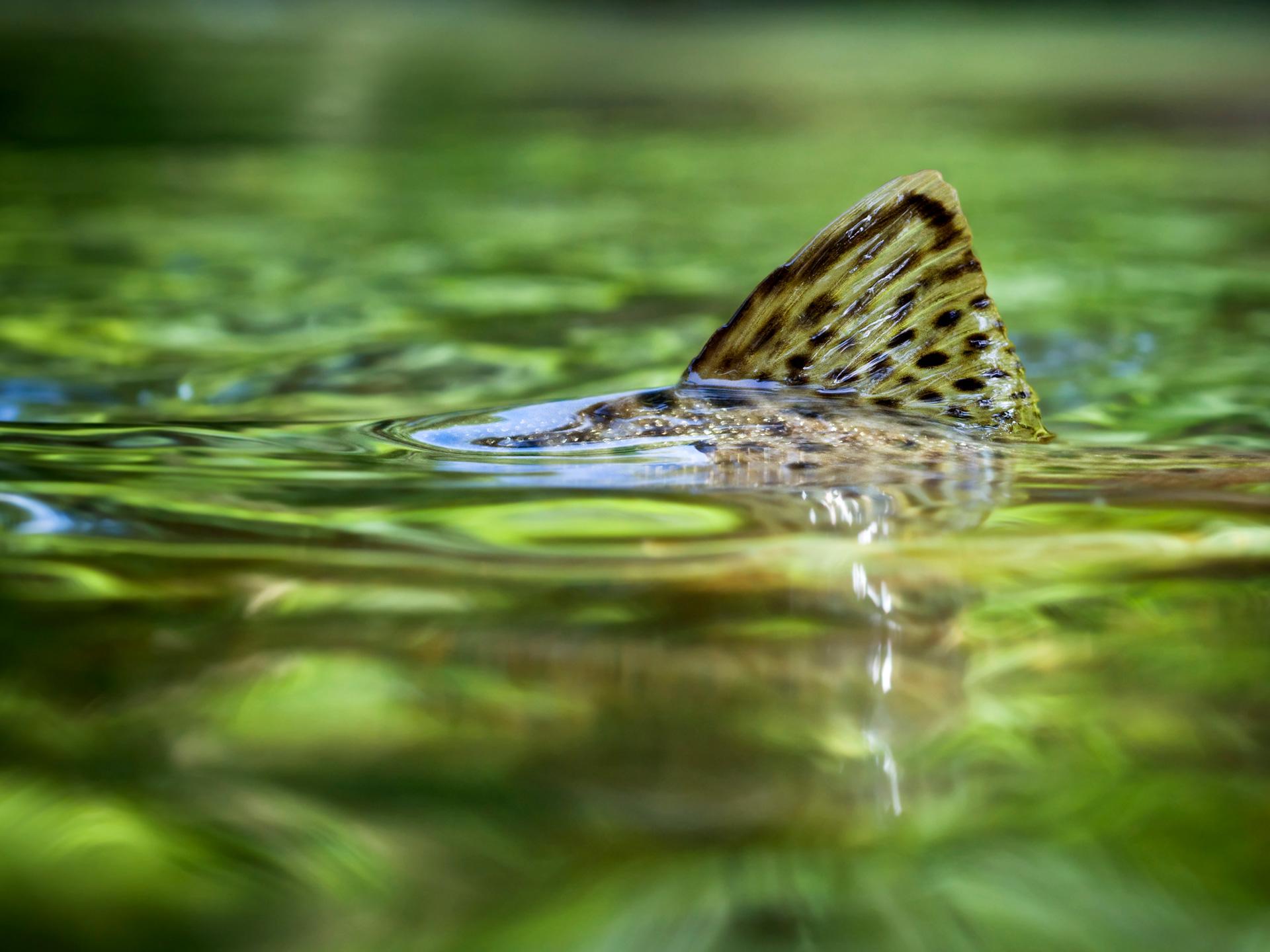 Das soziale Netzwerk für Anglerinnen und Angler